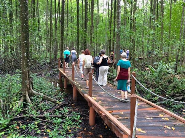 Boardwalk through Mangrove Forest, Kuala Sepetang