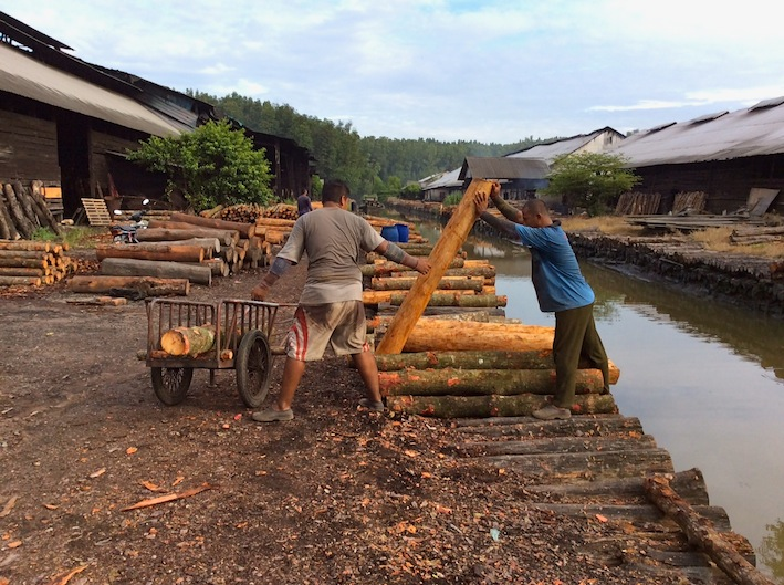 Mangrove logs for Charcoal Malaysia