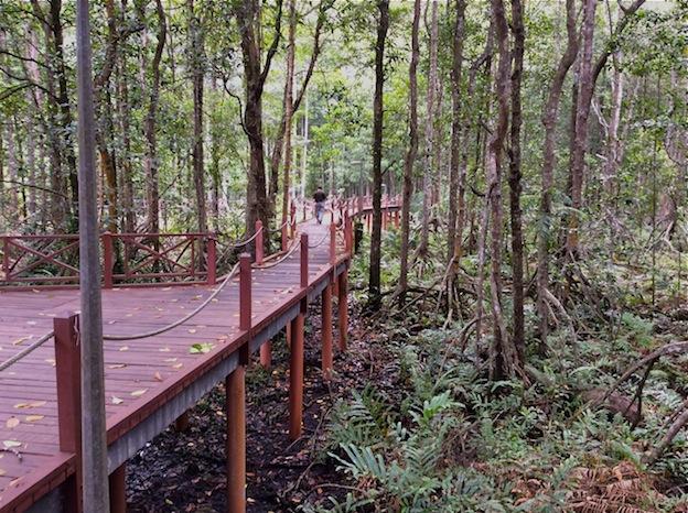 Mangrove Forest, Kuala Sepetang, Malaysia