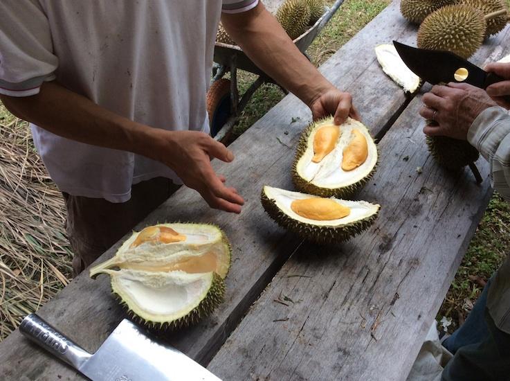 Durian Green Acres Balik Pulau